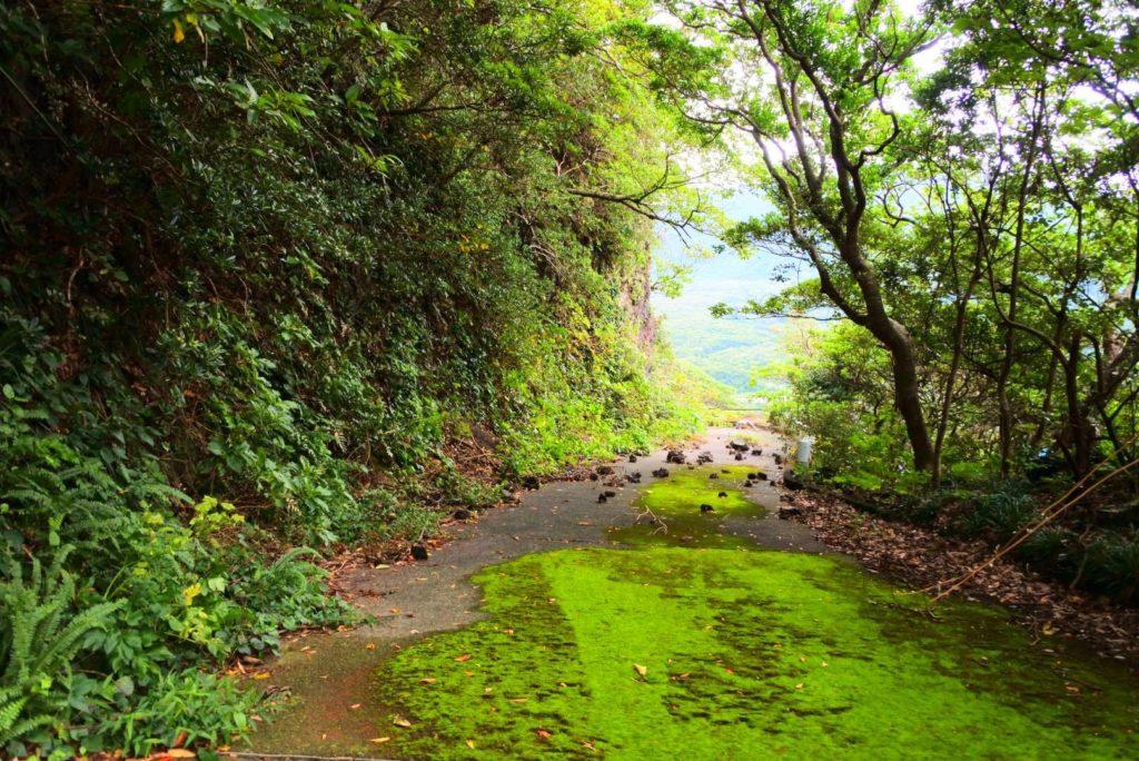 青ヶ島キャンプ場