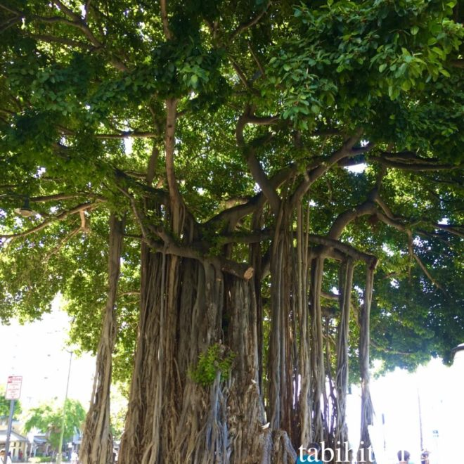 hawaii_waikiki_tree