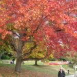バンクーバー最大の公園【スタンレーンパーク】| トラベルダイアリー