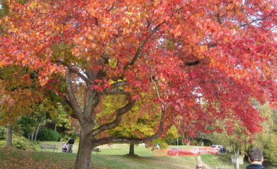 バンクーバー最大の公園【スタンレーンパーク】  トラベルダイアリー