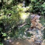 東京23区で唯一の渓谷【等々力渓谷】| トラベルダイアリー