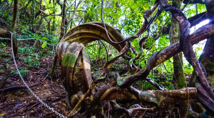 奄美在住のガイドさんに聞いた!自然溢れる♪真の穴場スポット巡りの旅| トラベルダイアリー