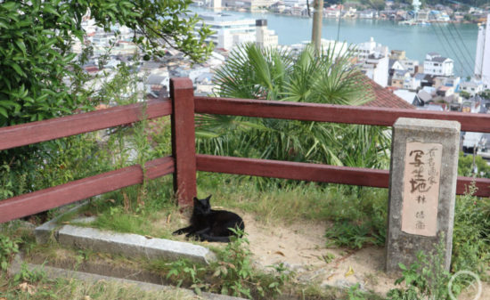 坂のある風景にシャッターが止まらない!レトロな港町・尾道をぶらり| トラベルダイアリー