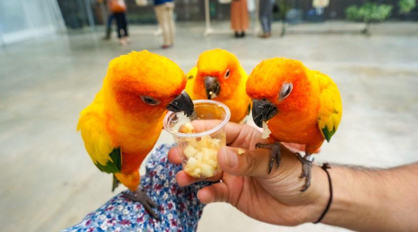 静岡 掛川花鳥園 可愛い鳥たち大集合♡~癒しの楽園へようこそ~| トラベルダイアリー