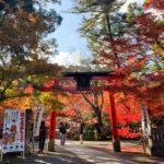 京都紅葉✖︎鍬山神社!〜絶景ビュースポット巡りしませんか?〜| トラベルダイアリー