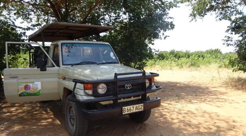 ボツワナ・チョベ国立公園にて初めてのサファリ体験! 間近でゾウの水浴びを観察| トラベルダイアリー