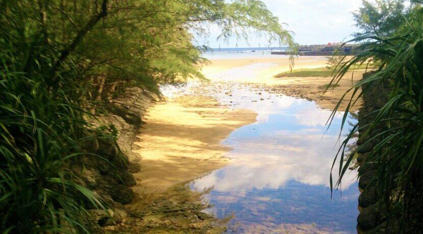 ☆*マングローブ☆*疲れた時には、ひとっこひとり居ない奄美大島の海を見に行こう| トラベルダイアリー