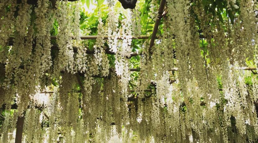小江戸・栃木の「蔵の街」&足利の「フラワーパーク」をめぐる旅!| トラベルダイアリー