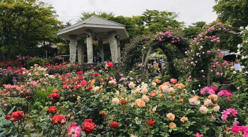 ~バラ&彫刻&富士山に癒された~アートリゾート・箱根で女子たび| トラベルダイアリー