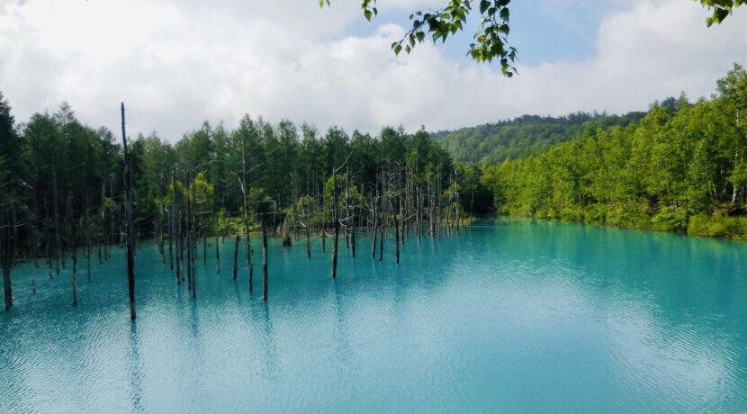 【八ヶ岳周辺シリーズ Part1】 樹々と水辺を求めて in May| トラベルダイアリー