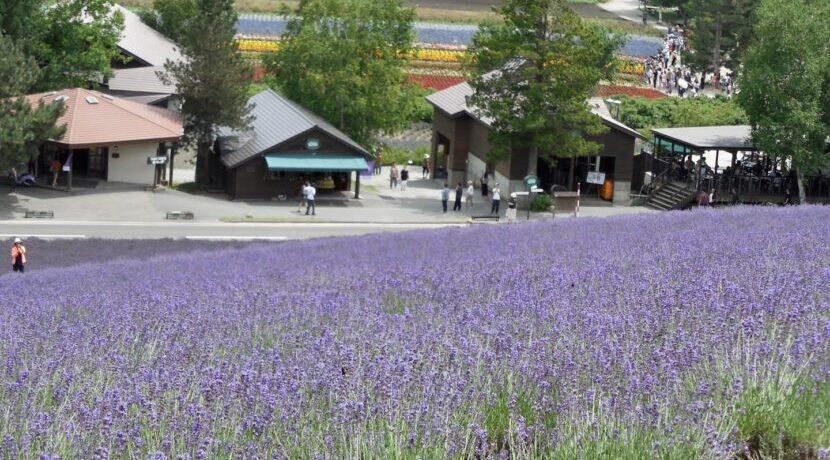 ~北の国から「五郎の石の家」と「最初の家」~in北海道・富良野| トラベルダイアリー