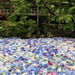 期間限定の絶景を楽しむたび!~in 茨城・桜川「雨引観音」~| トラベルダイアリー