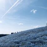 国営ひたち海浜公園で青の絶景を楽しむ旅~in 茨城・ひたちなか~| トラベルダイアリー
