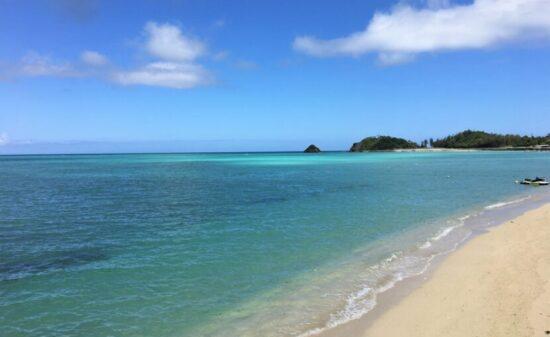 沖縄の大自然に触れる!愛犬と一緒に楽む「やんばる」の旅| トラベルダイアリー