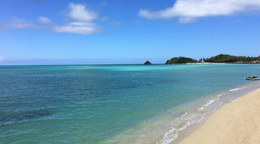 沖縄の大自然に触れる!愛犬と一緒に楽む「やんばる」の旅  トラベルダイアリー